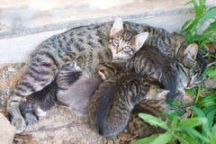 Katten matar hennes gulliga kattungar royaltyfria foton