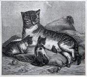 Katten matar kattungarna och musen arkivfoton