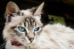 Katten med blått synar Royaltyfri Fotografi