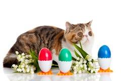 Katten med easter färgade ägg som isolerades på bakgrund Arkivfoton