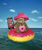 Katten med en munk gör selfie royaltyfri bild