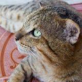 Katten med gräsplan synar Arkivfoto