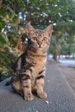 Katten med gräsplan synar royaltyfri fotografi