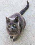 Katten med gräsplan synar pott Arkivbild