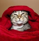Katten med gröna ögon ligger under den röda filten Arkivbild