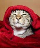 Katten med gröna ögon ligger under den röda filten Royaltyfri Bild