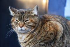 Katten med gr?splan synar arkivbilder