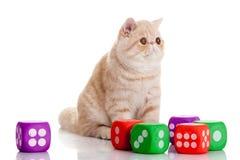 Katten med tärnar isolerat på vita backgroudhusdjurleksaker Royaltyfri Fotografi