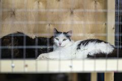 Katten met intelligente, droevige ogen bij een speciale liefdadigheidstentoonstelling die van rooster die van cel kijken, hen ver royalty-vrije stock foto
