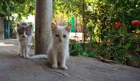 Katten mooie siësta Royalty-vrije Stock Afbeeldingen