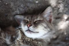 Katten mooie siësta Stock Afbeelding