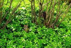 Katten nära buskarna i gräset Fotografering för Bildbyråer