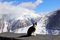 Katten och berget Royaltyfri Bild
