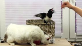 Katten och fågeln äter tillsammans lager videofilmer