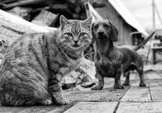 Katten och förföljer Arkivbilder