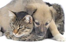 Katten och förföljer Royaltyfri Fotografi