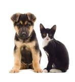 Katten och förföljer Arkivfoto