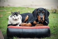 Katten och förföljer Fotografering för Bildbyråer