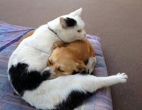 Katten och förföljer Royaltyfria Foton
