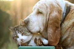 Katten och förföljer Royaltyfria Bilder