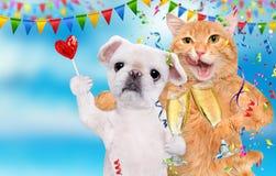 Katten och hunden firar med champagneexponeringsglas Arkivbild