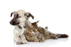 Katten och hunden ligger tillsammans. Arkivbilder