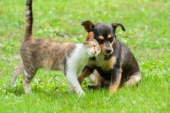 Katten och hunden trycker på deras huvud Härligt djurt kamratskap royaltyfria foton