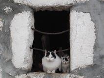Katten och kattungarna på fönstret Arkivfoto