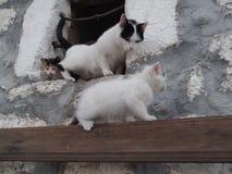 Katten och kattungarna på fönstret Royaltyfri Foto