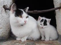 Katten och kattungen på fönstret Royaltyfri Foto