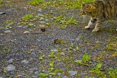 Katten och musen håller sig ögonen på arkivfoto
