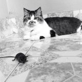 Katten och tjaller royaltyfri fotografi