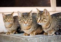 Katten op de straat Royalty-vrije Stock Afbeelding