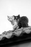 Katten op een dak. Zwart-wit Stock Afbeeldingen