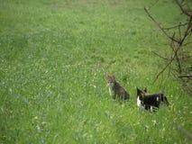 Katten op het gebied stock footage