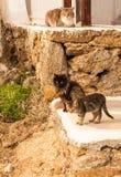 Katten op het strand, Mikonos, Griekenland Stock Afbeeldingen