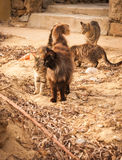 Katten op het strand, Mikonos, Griekenland Stock Fotografie