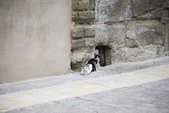 Katten in oude straat royalty-vrije stock foto's