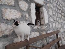 Katten på bänken och kattungen på fönstret Royaltyfri Fotografi