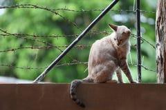Katten på Barbed - trådstaket Royaltyfri Foto