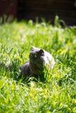 Katten på ett gräs Arkivbilder