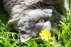 Katten på ett gräs Fotografering för Bildbyråer