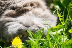 Katten på ett gräs Arkivfoto
