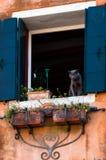 Katten på fönstret Arkivbild