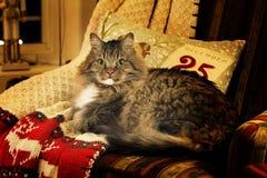 Katten på jul filt varm belysning royaltyfri bild