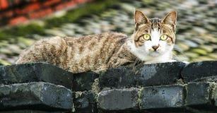 Katten på taket, chengdu, porslin fotografering för bildbyråer