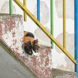 Katten på trappan poserar Royaltyfri Fotografi