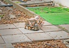 Katten in park Royalty-vrije Stock Foto
