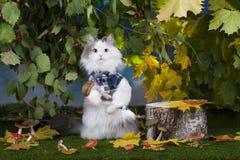 Katten plocka svamp i skogen arkivbild