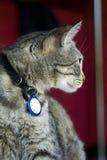 katten poserar regal royaltyfri bild